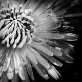 Муравей на цветке стоковые изображения