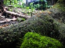 Муравей, древесина, и камень Стоковые Фото