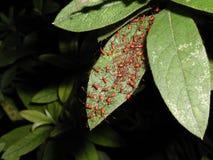 муравей 2 Стоковые Изображения