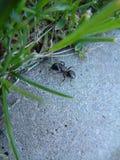 муравей Стоковая Фотография
