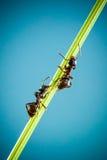 2 муравея Стоковые Изображения