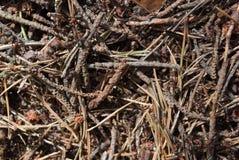 Муравьи в лесе, чехия Стоковые Фото