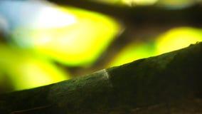 муравьи дерева зеленого цвета работника на ветви сток-видео