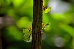 Муравьи Колумбия стоковые изображения rf