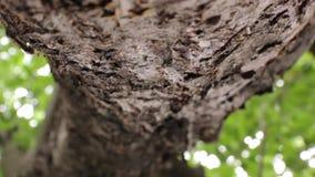 Муравьи на промежутке времени ветви дерева акции видеоматериалы