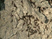 Муравьи на расшиве дерева видеоматериал