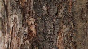 Муравьи проползают под расшивой дерева видеоматериал