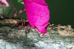 Муравьи резца лист в поле тропического леса Стоковые Фотографии RF