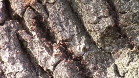 Муравьи infested дерево акции видеоматериалы