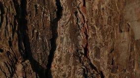 2 муравья воюя на коре дерева видеоматериал