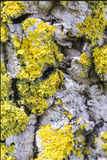 2 муравья на расшиве Стоковые Фото