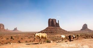 Мустанги на долине памятника Стоковое Фото