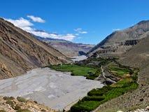 Мустанг в Гималаях Стоковое Фото