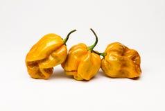 Мустард Habenaro - горячий перец Стоковая Фотография RF