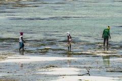 Мусульманские женщины на пляже стоковое изображение