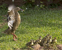 Должен быть День матери Стоковая Фотография