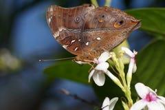 Муха бабочки в природе утра Стоковое фото RF