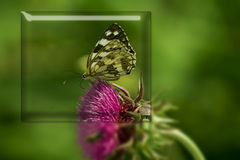 Муха бабочки в природе утра Стоковая Фотография RF