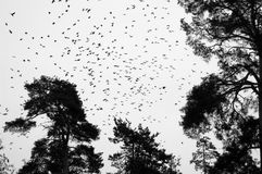 муха вороны Стоковое Изображение RF