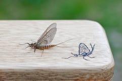 Муха в мае/коробка мухы стоковая фотография