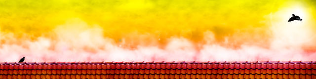 муха голубя к стойке любовника голубя на крыше когда заход солнца Стоковое фото RF