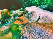 муха дракона сидя на утесе с красивым взглядом реки Стоковые Изображения RF