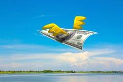 Муха денег Стоковое Изображение RF