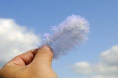 муха желания к Стоковая Фотография RF