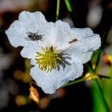 Муха и муравей стоковые фото