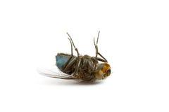муха крупного плана мертвая Стоковые Фото