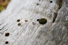 Муха макроса на дереве Стоковое фото RF