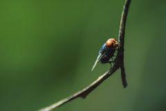 Муха макроса сидя в ветви Стоковое фото RF