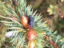 Муха на ветви Стоковое фото RF