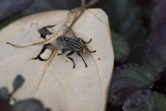 Муха на листьях Стоковая Фотография RF