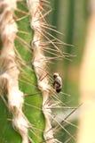 Муха на кактусе Стоковая Фотография RF