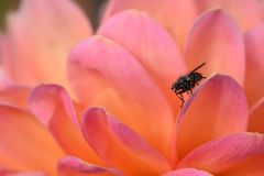 Муха на красочном цветке Стоковые Изображения RF