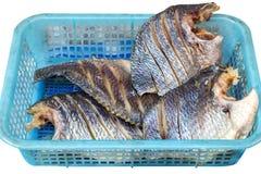 Муха на посоленных рыбах Закрытый вверх Белая предпосылка Путь клиппирования Стоковые Фотографии RF