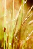 Муха на траве Стоковые Изображения