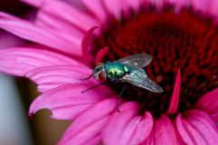 Муха на цветке Стоковые Фото