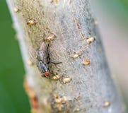 Муха плоти смотря вниз на дереве стоковое изображение