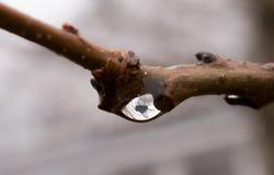 Муха поглощенная в падении воды Стоковое Фото