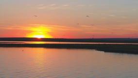 Муха птицы чайок над рекой на времени захода солнца Птицы летают на заход солнца Заход солнца на реке, воздушном Стоковая Фотография RF