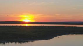 Муха птицы чайок над рекой на времени захода солнца Птицы летают на заход солнца Заход солнца на реке, воздушном Стоковые Фото