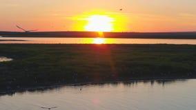 Муха птицы чайок над рекой на времени захода солнца Птицы летают на заход солнца Заход солнца на реке, воздушном Стоковые Изображения