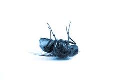 муха син мертвая Стоковые Изображения