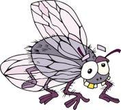 муха смешная Стоковое Изображение
