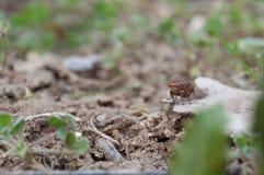 Муха трюфеля в Провансали, Франции Стоковое фото RF