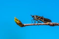 муха уродская Стоковые Фотографии RF
