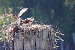 муха учя к Стоковое Фото