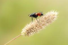 муха цветка Стоковые Изображения